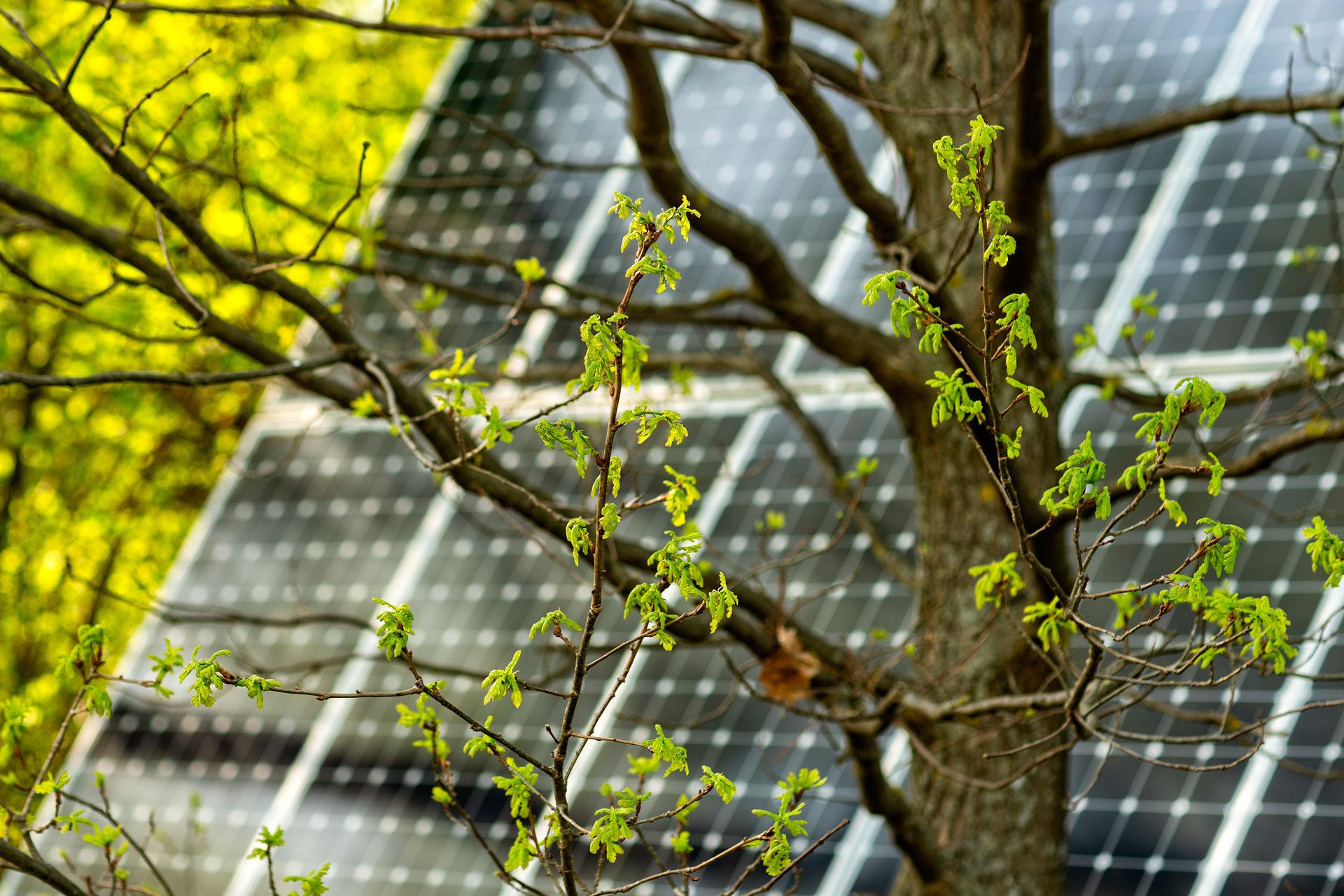 De l'énergie propre sur votre toit – avec le photovoltaïque